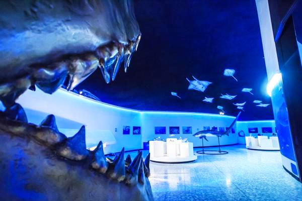 TiburonesMantasYRayas-ok