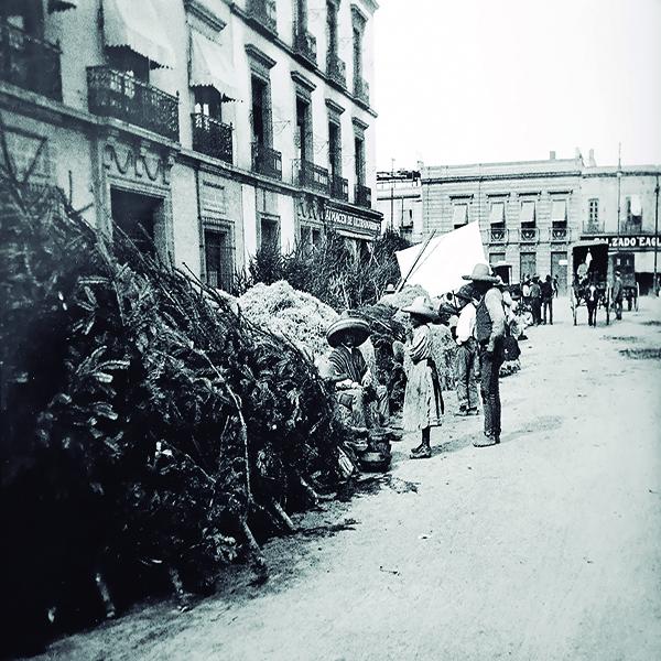 FOTO DOS MÁSPORMÁS VENTA DE ARBOLITOS