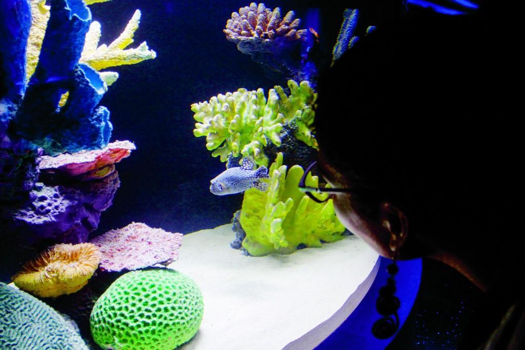 MÉXICO, D.F., 30MAYO2014.- Esta se realizó la inauguración de Acuario Inbursa con más de 230 especies y 5,000 ejemplares marinos, entre las que destacan los tiburones, caballitos de mar, tortugas, cocodrilos, pirañas, medusas, entre muchas otras que se podrán apreciar en 48 diferentes exhibiciones en una estructura subterránea de cuatro niveles. Abrirá sus puertas al público en general el próximo 11 de Junio FOTO: RODOLFO ANGULO /CUARTOSCURO.COM