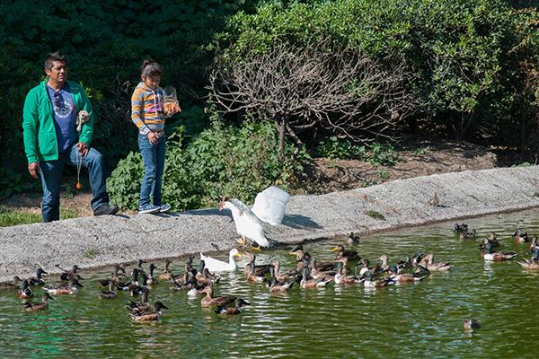 MÉXICO, D.F., 24ENERO2015.- Un padre en compañía de su hija, alimentan a una familia de patos que viven en una laguna del Parque Tezozómoc, ubicado al norte de la ciudad. FOTO: DIEGO SIMÓN SÁNCHEZ /CUARTOSCURO.COM