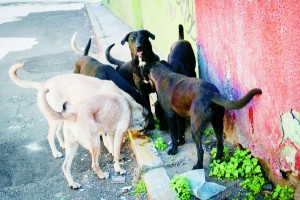 MÉXICO, D.F., 02ENERO2015.- Ocho perros callejeros recorren las calles de la ciudad en busca de algún desperdicio de comida para poder sobrevivir. FOTO: DIEGO SIMÓN SÁNCHEZ /CUARTOSCURO.COM
