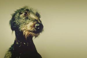 sr.-perro