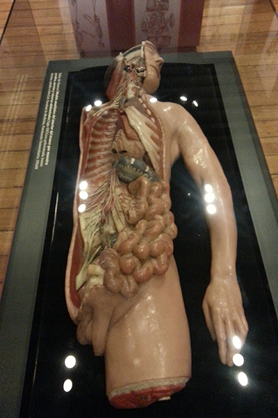 Infecciones, fetos y malformaciones en el Museo de Medicina - Máspormás