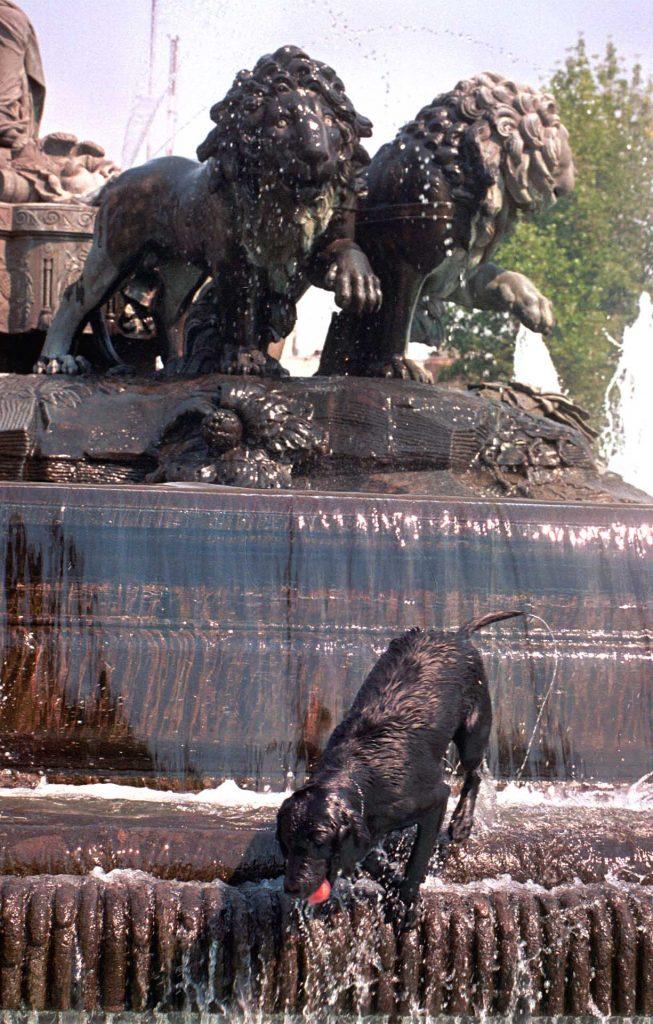 """MEXDF17MAR2002.- Un perro juguetea en la fuente de """"La Cibeles"""" debido a las altas temperaturas que se registro este d'a en la capital. FOTO:Christian Palma/CUARTOSCURO.COM"""