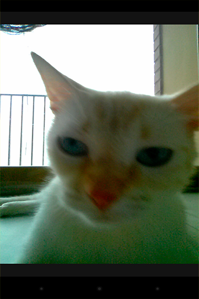 snap-cat