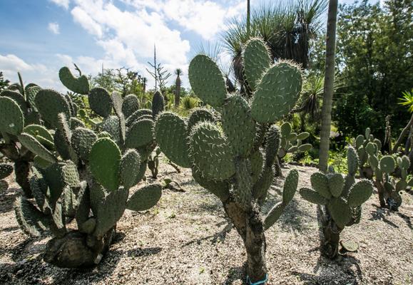 Fotogaler a i el jard n bot nico de la unam m sporm s for Jardin botanico unam 2015