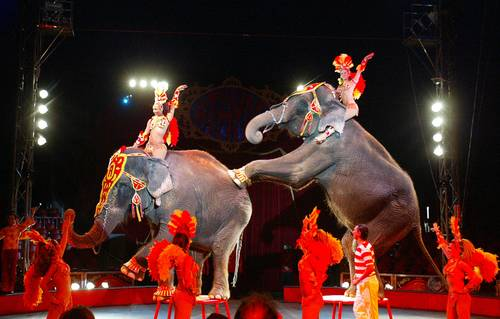 animales-en-los-circos