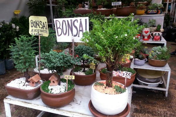 Flores y plantas las del mercado de nativitas m sporm s for Plantas de interior precios