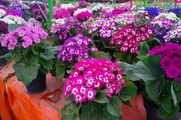 Flores y plantas las del mercado de nativitas m sporm s for Como poner un vivero
