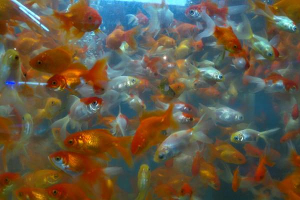 El mercado de peces de la colonia morelos en la cdmx for Criaderos de pescados colombia