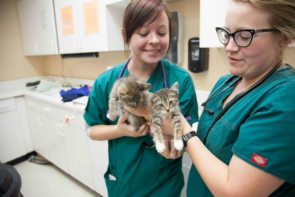 veterinario con gato